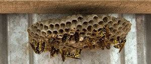 wespen en bijen verjagen